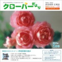 clover33